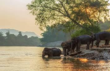 Wild elephants, Kanchanaburi, Thailand