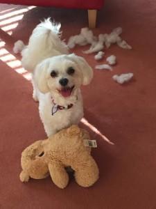 joesie with teddy bear Kendall
