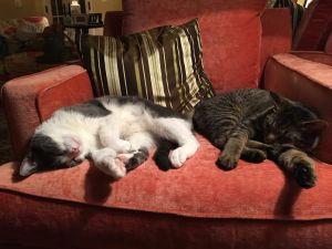 Cybele loening cats