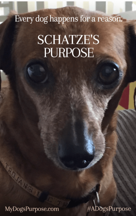 #Giveaway A DOG'S PURPOSE @a_dogs_purpose #ADogsPurpose 1.20