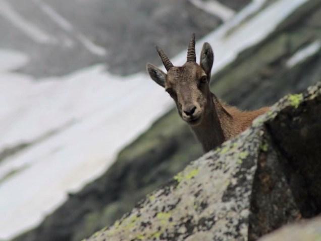 Sport Ambiente e cultura cervo