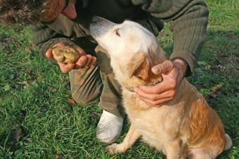 Aldo Alessandria e il suo cane da tartufi storia del tartufo bianco di alba booking piemonte edizioni del capricorno