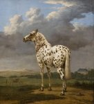 The Piebald Horse