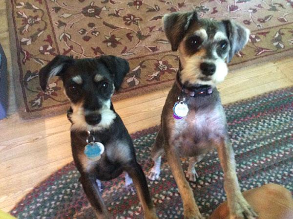 Mary Casanova's new puppies