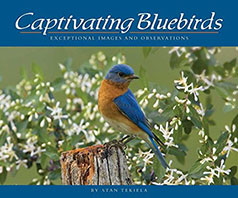 Captivating Bluebirds