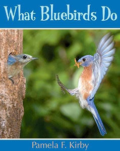 What Bluebirds Do