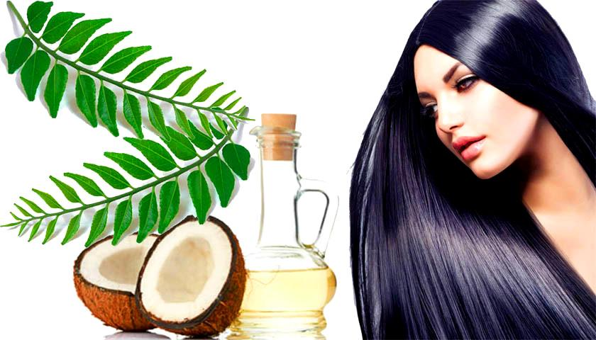 Curry Leaves Premature Grey Hair Treatment