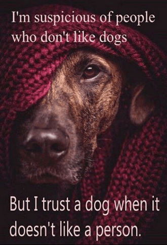 Trusting dogs who don't like a person