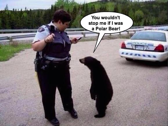 Black bear cries racism