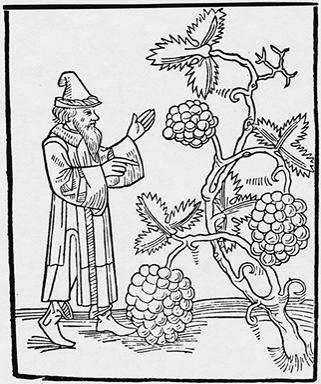 Medieval image of Mohamed cursing the vines