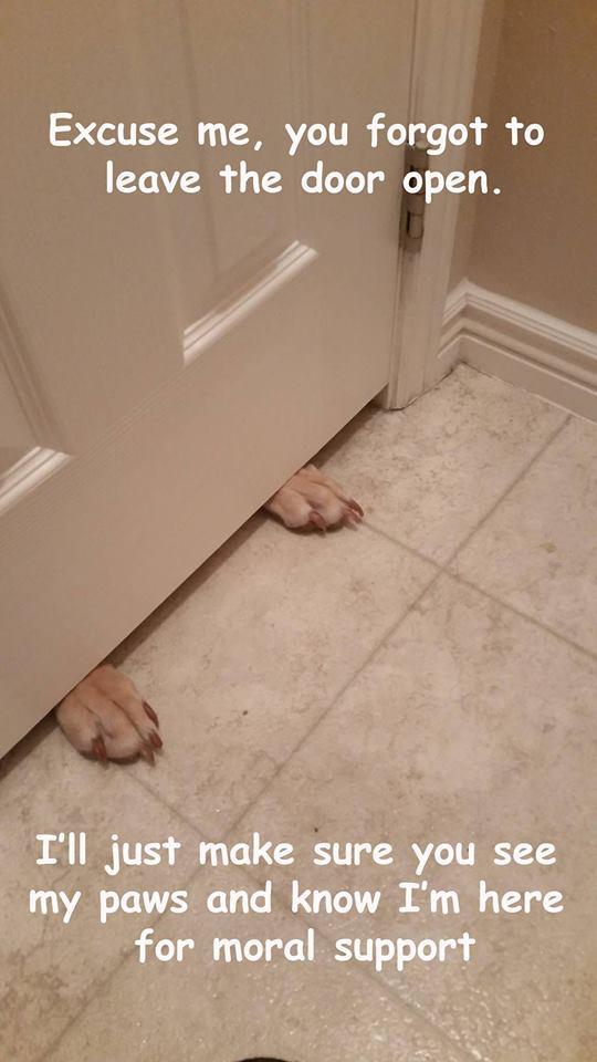 Paws under the door