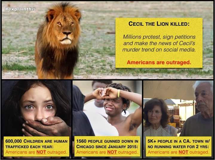 Cecil the lion and the things we ignore
