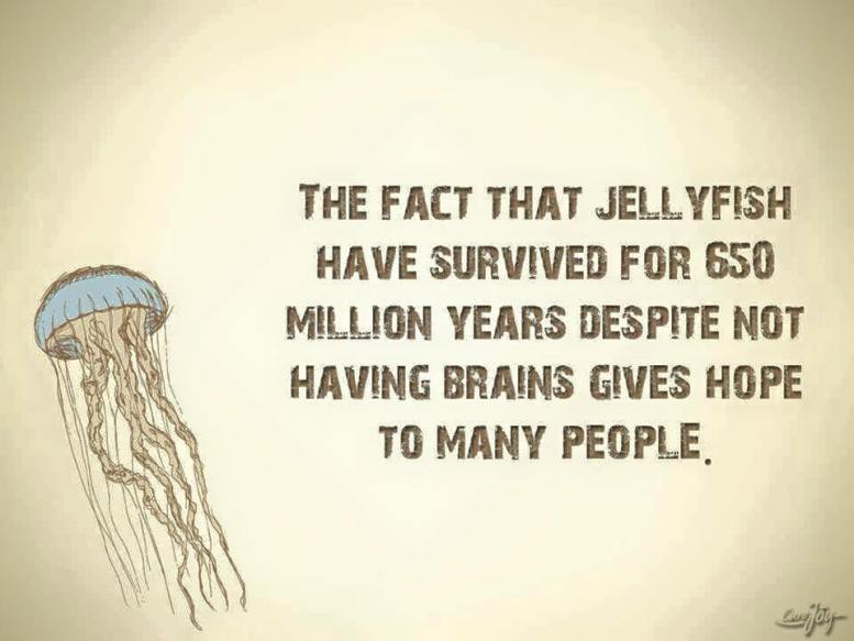 Jellyfish survival