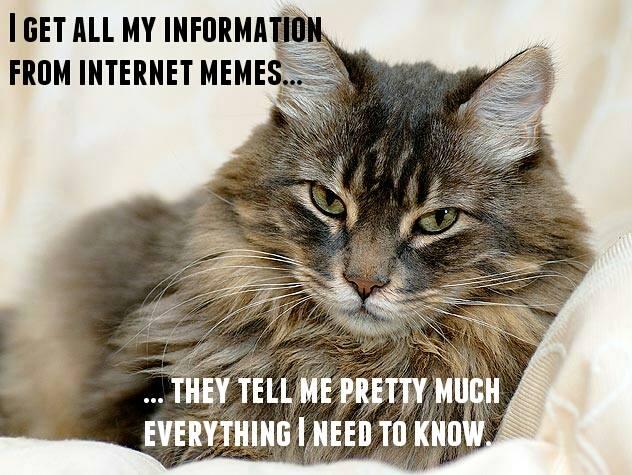 Cat internet memes