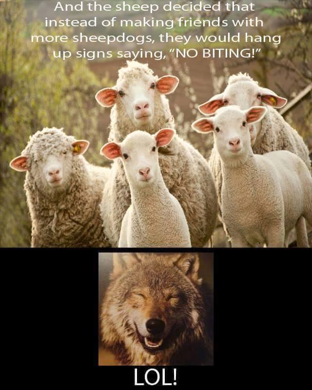 Sheep and no biting rule