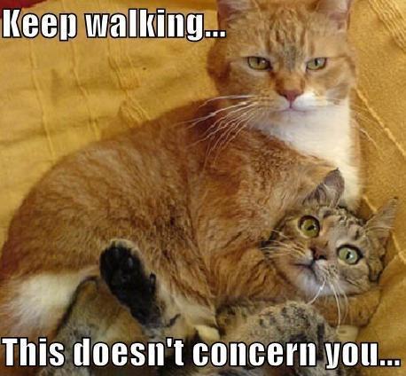 Keeping walking cats