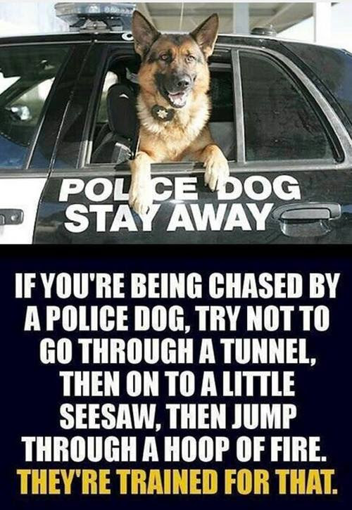 Police dogs trained for the chase