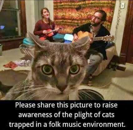 Cat trapped in folk music environment