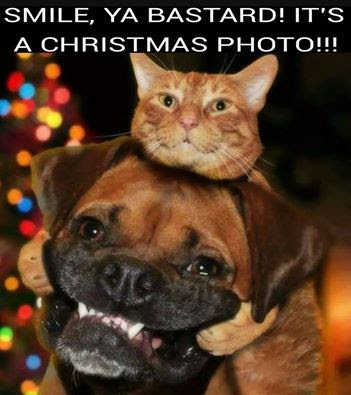 Merry Christmas dog and cat