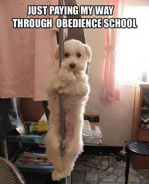 Dog pole dancer