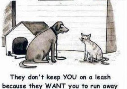 Silly why cats aren't on leashes