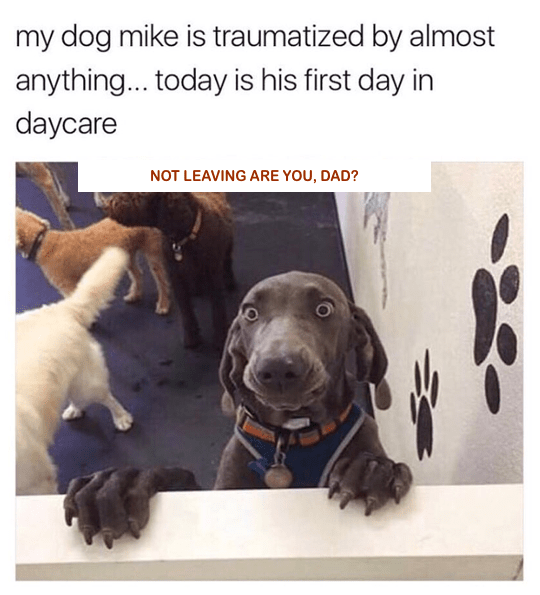 silly-dog-traumatized-a-doggy-day-care