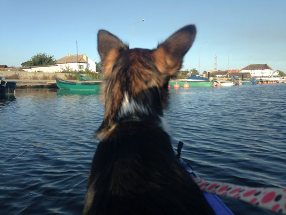 Danube River Kayaking Delta Safari