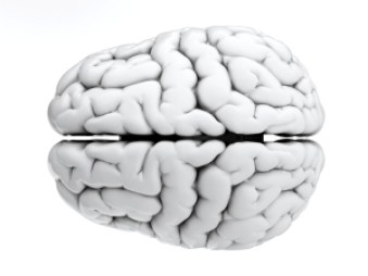 Black and white photo of a brain illustrating that deliberate purposeful practice changes the neural circuitry of our brain.