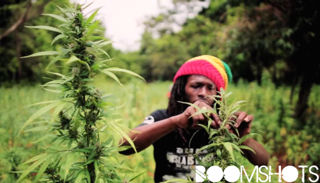 """WATCH THIS: Jesse Royal """"Gimme Likkle Herb / Finally"""" Official Music Video"""