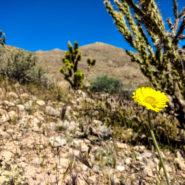 cedar pocket road arizona