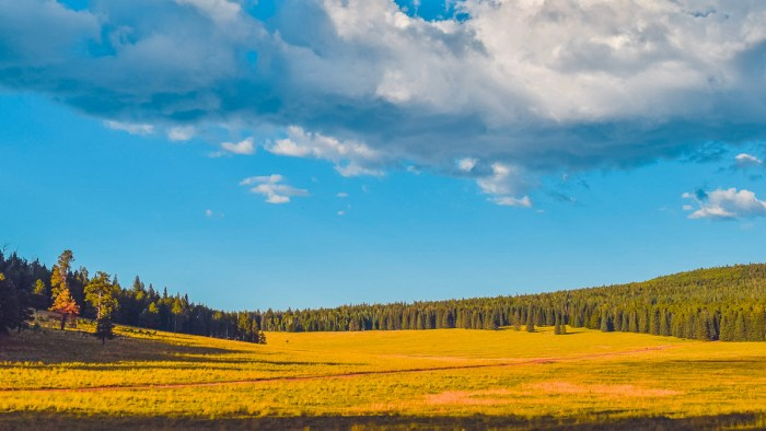 greens peak camping, apache-sitgreaves national forest