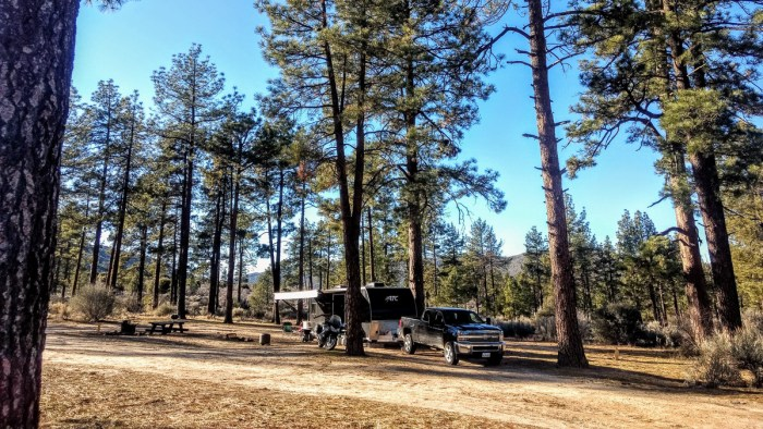 can you camp for free in a national forest