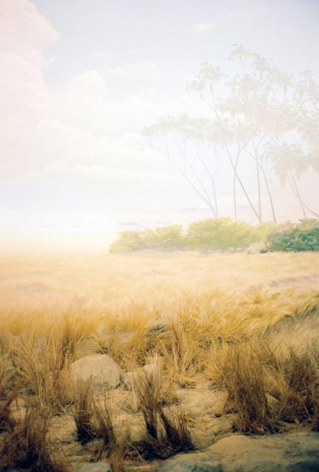 Kodama9 Photographer Spotlight: Andrew Kodama Design Photography