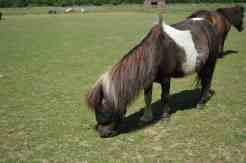 Redwings Horse Sanctuary F