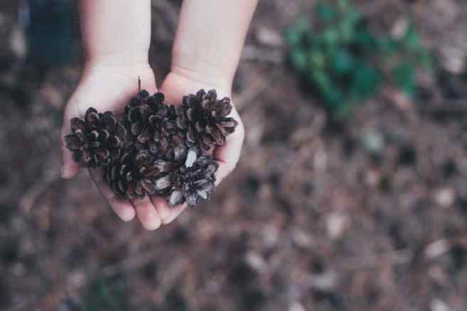 Collecting Pine Cones (and Christmas Crafts)