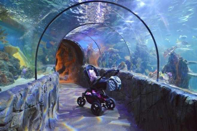 chessington-winters-tail-icandy-sealife-centre