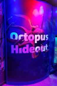National SEA LIFE Centre Birmingham - Octopus Hideout
