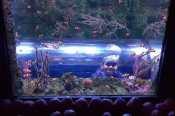 National SEA LIFE Centre Birmingham - Roo Nemo Tank