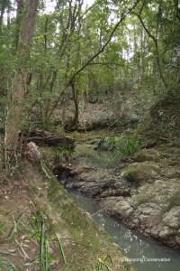Creek Bed