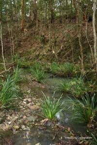Creek bed in Rainforest