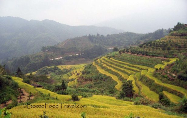 Fujian Rice Terrace
