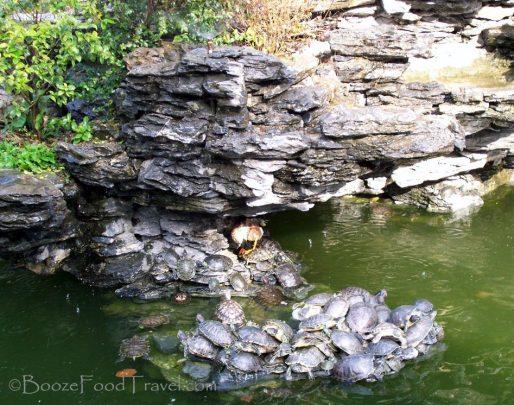 turtle pond china