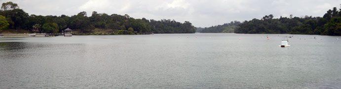macritchie-reservoir-banner