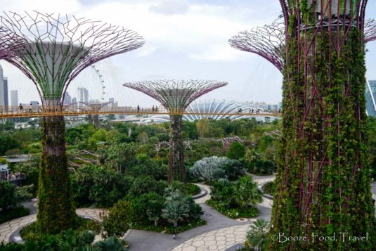 View of the Supertrees from the walkway