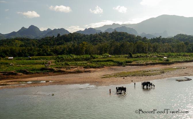 manadalo elephants