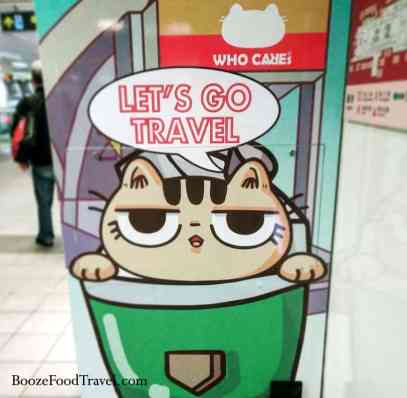 travel cat