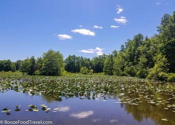 great swamp
