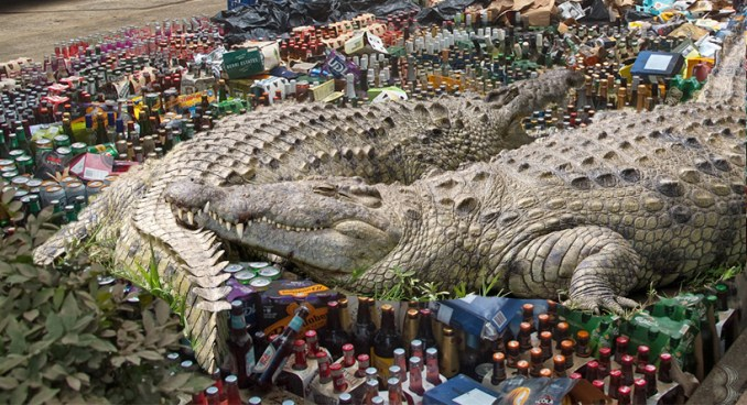 crocodile bile beer