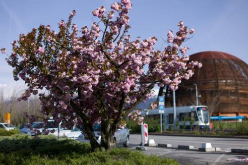 Primavera al CERN (Credits: CERN)