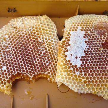 Miels et santé humaine